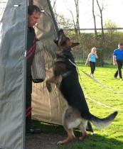 Hundesport urlaub